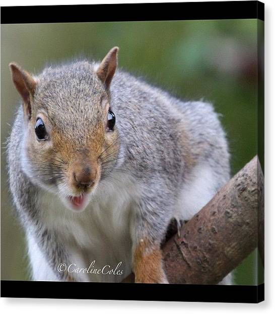 Squirrels Canvas Print - Angry Squirrel #squirrel #naturelovers by Caroline Coles