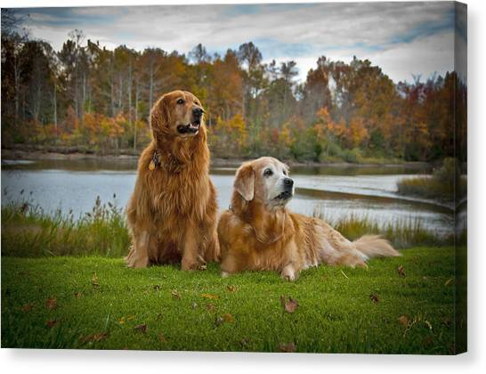 Canvas Print featuring the photograph Angus And Lucky by Williams-Cairns Photography LLC