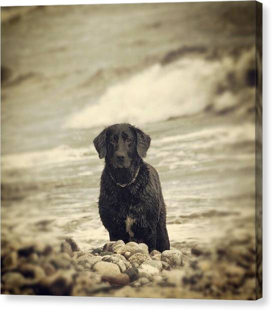 Ocean Animals Canvas Print - #animals #tiere #hund #dogs #water by Jens Buessow