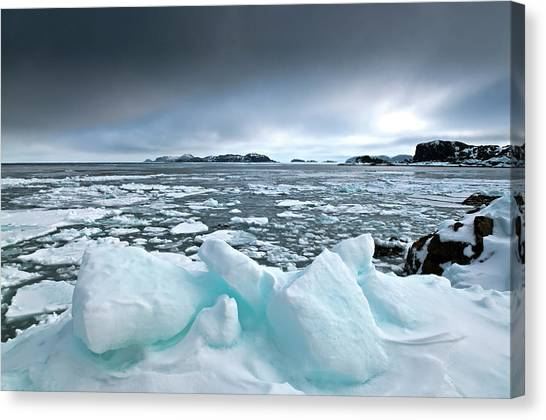 Newfoundland And Labrador Canvas Print - Another Chilly One by Spence Dove Photography