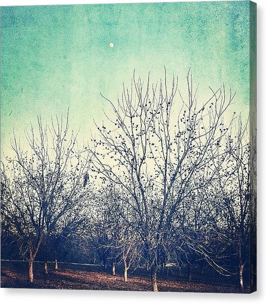 Grove Canvas Print - Another From The #pecan #grove by Rachel Boyer