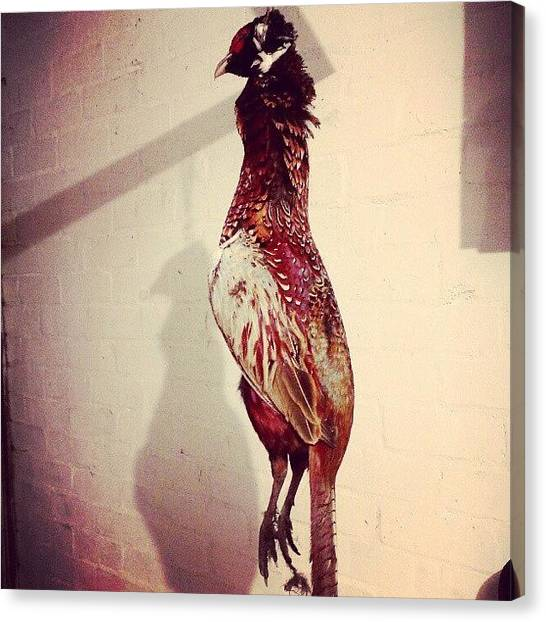 Pheasants Canvas Print - Another Pheasant Hanging Around In The by Bee Mcmahon
