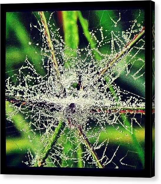Spider Web Canvas Print - Another Spider Web From Yesterday by Roger Snook