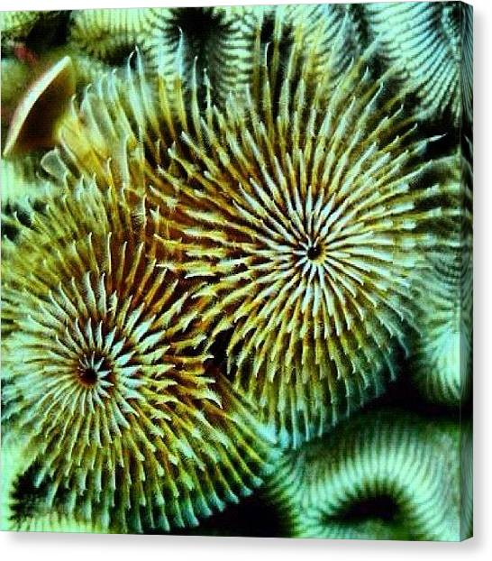 Scuba Diving Canvas Print - Another Underwater Photo. This Is A by Arturo Brook