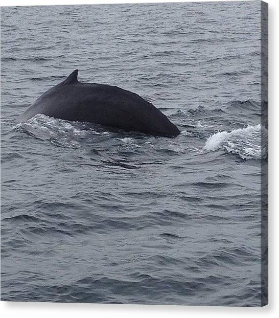 Whales Canvas Print - Another Whale We Saw While Whale by Simon Shifrin