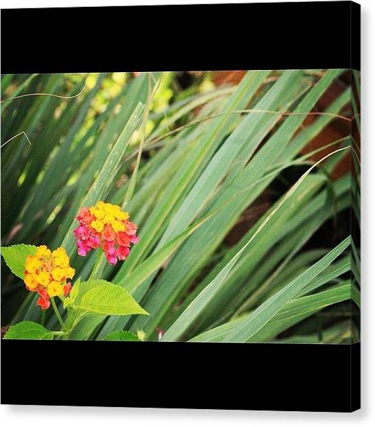 Political Canvas Print - Another Wild Flower By My Lens, A Truly by Ahmed Oujan