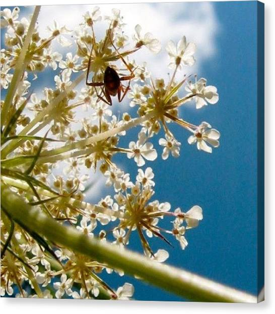 Ants Canvas Print - #ant #closeup #outdoor #outside #nature by Elissa Q