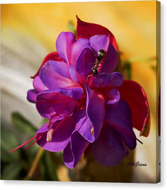 Ant On A Fuschia In Full Bloom Canvas Print by Angelito De Jesus