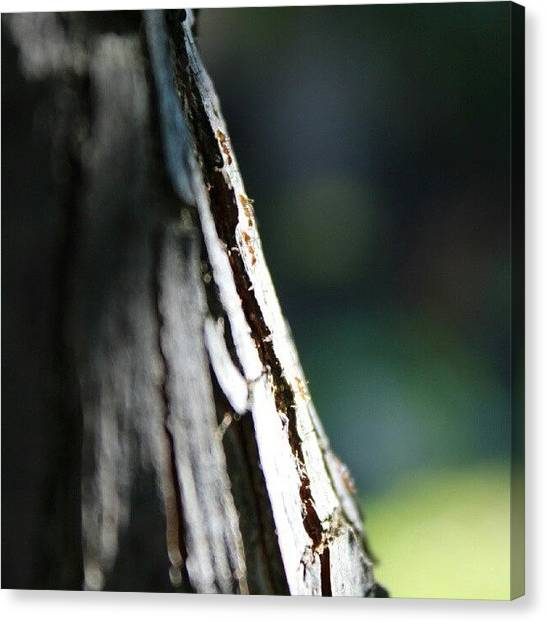 Ants Canvas Print - Ants On A Journey #ants #insect #bug by Saul Jesse Beas