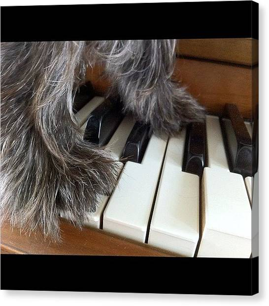Piano Canvas Print - Anyone Can Play Piano. 🐶😊🎶 by Jenni Munoz