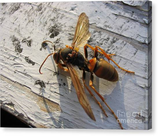 Apache Red Wasp Canvas Print