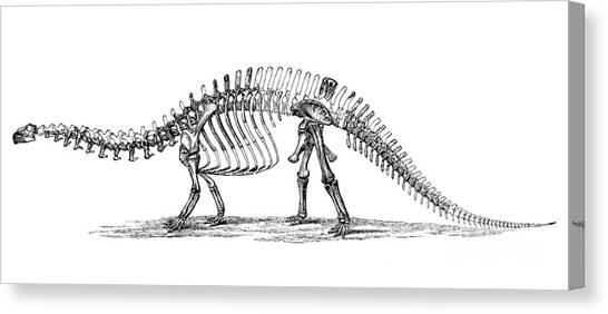 Brontosaurus Canvas Print - Apatosaurus Excelsus,  Aka Brontosaurus by Science Source