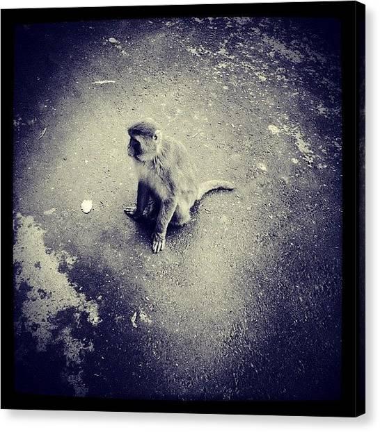 Apes Canvas Print - #ape #chimp #monkey #monkeybusiness by Moon Man