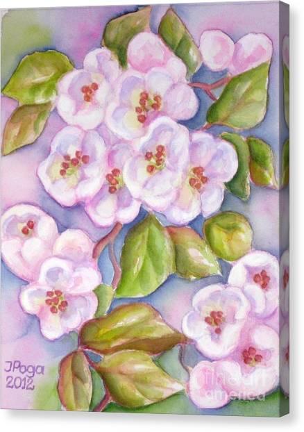 Apple Blossoms 2 Canvas Print