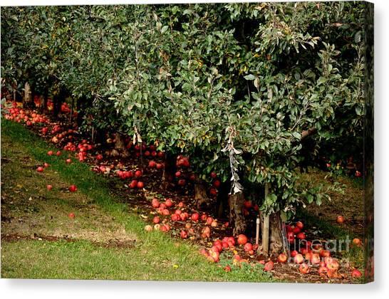 Apple Fall Canvas Print