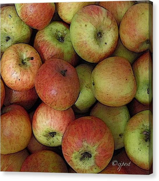 Harvest Canvas Print - Apple Harvest by Cynthia Post