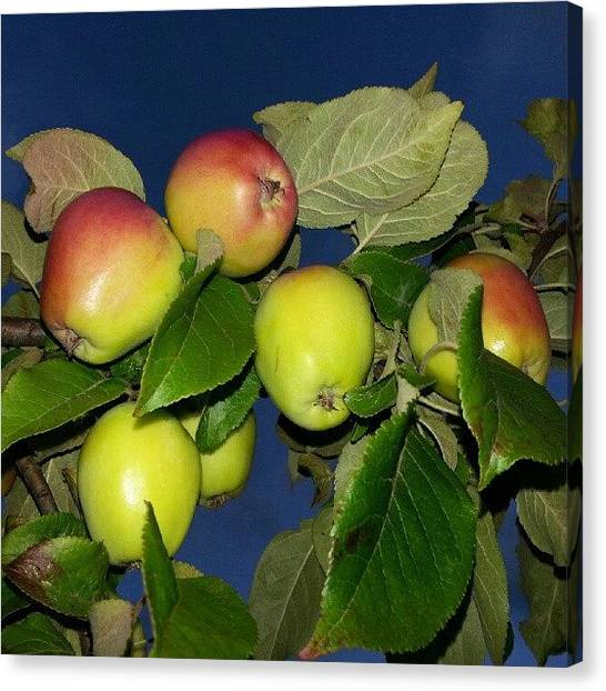 Fruit Trees Canvas Print - Apple1 by Andreas Malm