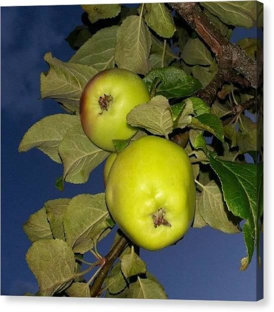 Fruit Trees Canvas Print - Apple2 by Andreas Malm