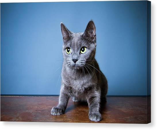 Cats Canvas Print - Apprehension by Square Dog Photography