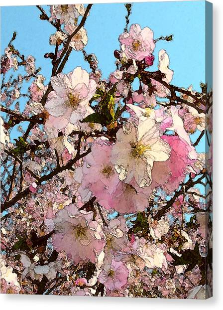 April Morning With Cherry Blossoms Canvas Print