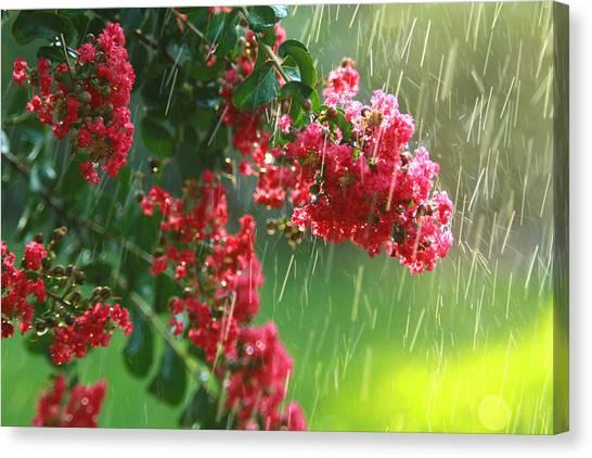 April Showers Canvas Print