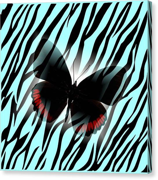 Aqua Zebra With Black Butterfly Canvas Print by Florene Welebny