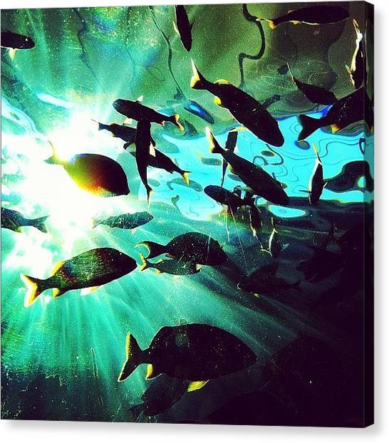 Aquariums Canvas Print - Aquarium Sesh #instagram #iphoneography by Dylan Hotfire
