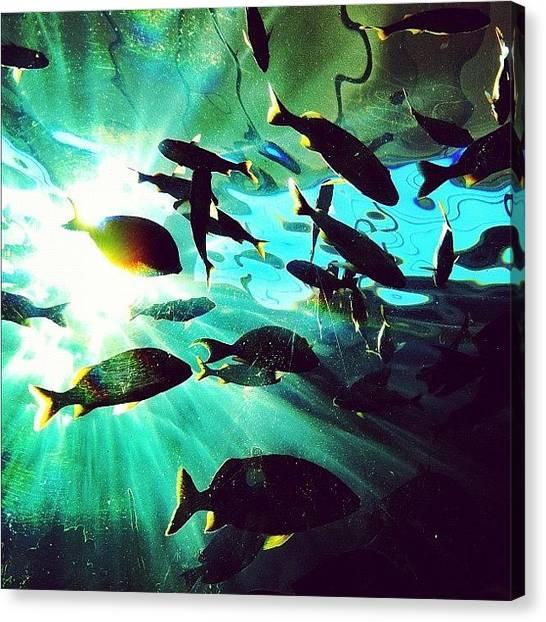 Aquariums Canvas Print - Aquarium Sesh #instagram #iphoneography by Dylan Hotfire