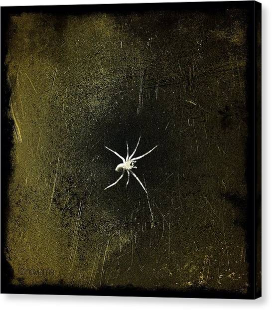 Spiders Canvas Print - Arachnid by Natasha Marco