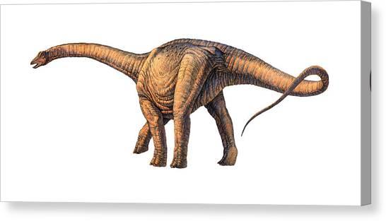 Argentinosaurus Dinosaur Canvas Print by Joe Tucciarone