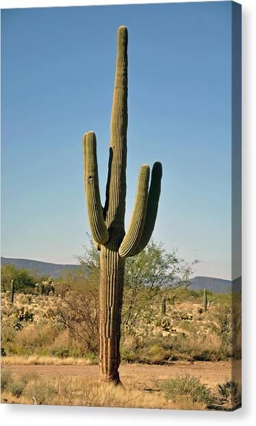 Arizona Cactus Canvas Print