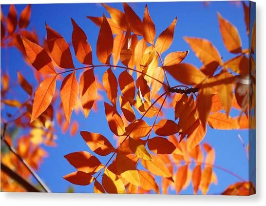 Arizona Fall 1 Canvas Print
