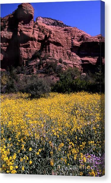 Arizona Flower Field Canvas Print by Barry Shaffer