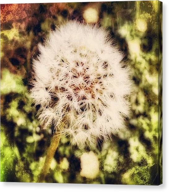 Innocent Canvas Print - as A Child, My Wishes Were Simple by Carrie Mroczkowski