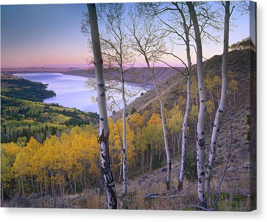 Teton National Forest Canvas Print - Aspen Forest Overlooking Fremont Lake by Tim Fitzharris