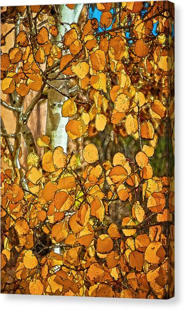 Aspens Gold Canvas Print