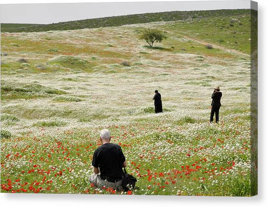At Lachish's Magical Fields Canvas Print