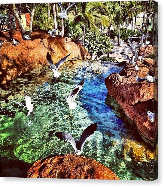 Bahamas Canvas Print - Atlantis - Birds In Flight Part Deux by James Heck