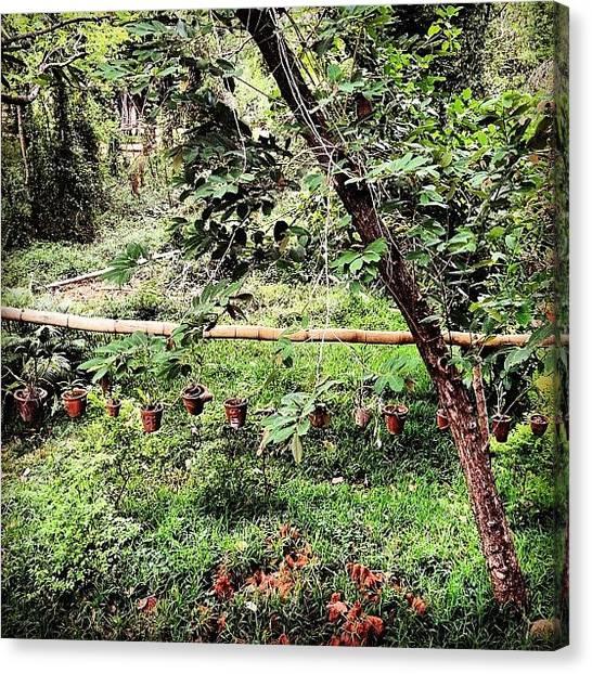 Jungles Canvas Print - #auroville #needam #guesthouse by Sahil Gupta