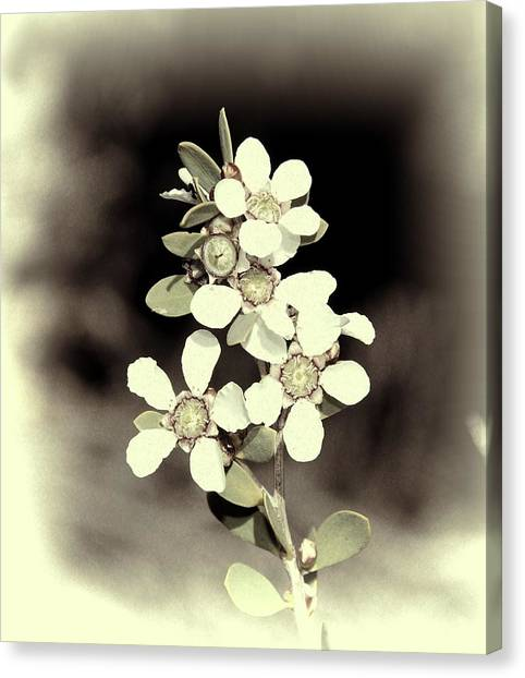 Australian Coastal Wildflowers Canvas Print