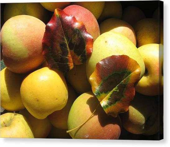 Autumn Apple Afternoon Canvas Print
