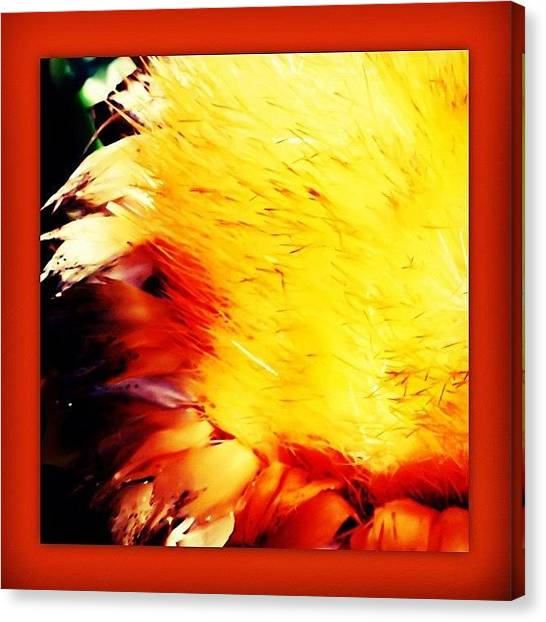 Artichoke Canvas Print - Autumn Arrangement #artichoke #ikebana by Yoni Mayeri