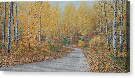 Autumn Birches Canvas Print by Jake Vandenbrink