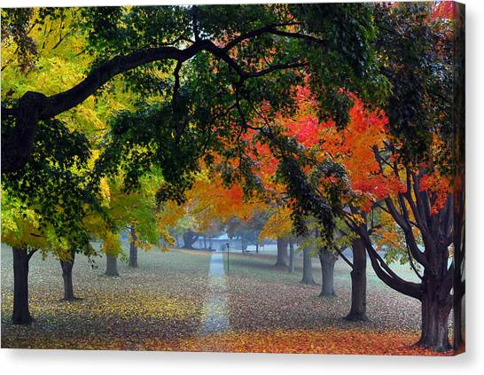Autumn Canopy Canvas Print