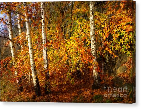 Colorplay Canvas Print - Autumn Colorplay by Lutz Baar