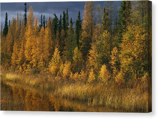 Northwest Territories Canvas Print - Autumn Colors Are Displayed by Raymond Gehman