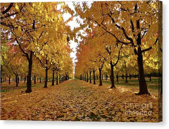Autumn Colors At He's Best Canvas Print