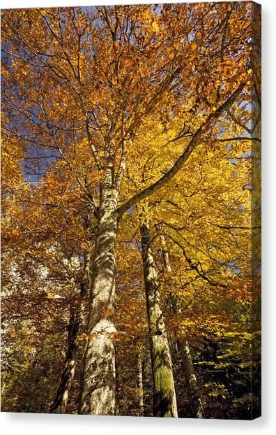 Autumn Colour Canvas Print by Bob Gibbons