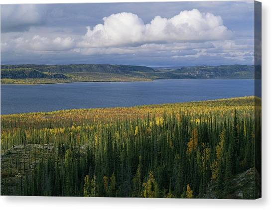 Northwest Territories Canvas Print - Autumn Foliage Surrounds Campbell Lake by Raymond Gehman