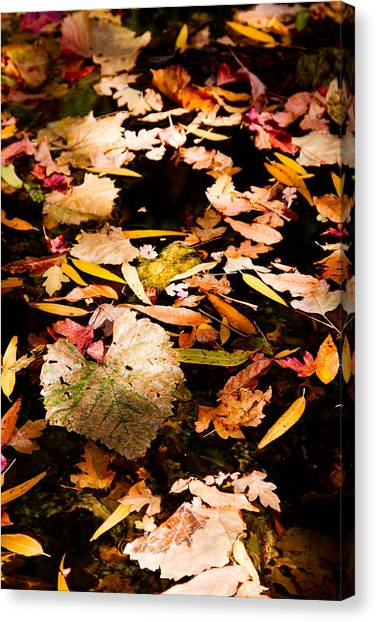 Autumn In Texas Canvas Print